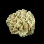 Delicate underwater architecture 1: coral