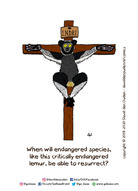 I.N.D.R.I. When will endangered species, like this critically endangered lemur, be able to resurrect?